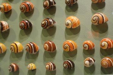 a-go-gos com snail shell wall