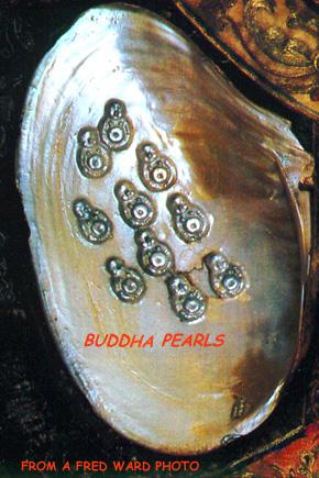 sfu. ca buddha pearls