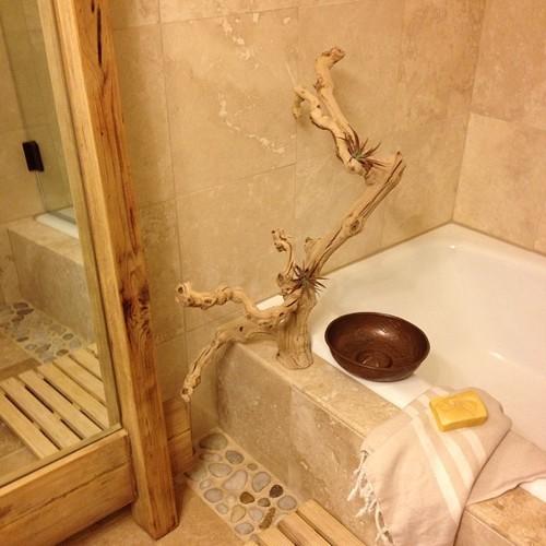 apartmentf15 blogspot com tillandsia bathroom awesome branch