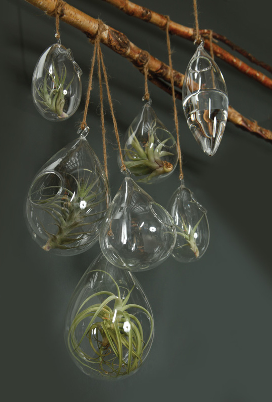 hooksandlattice com how to decorate with hanging-terrariums-with-air-plants glass bubble chandelier idea