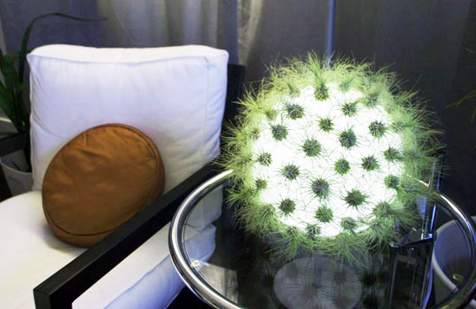inhabitat com livinglight tillandsia lamp