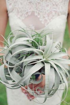 pinterest com 2013 wedding trends tillandsia and bromeliad bouquet