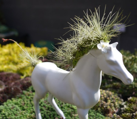 sprouthome com air plants horse sculpture tillandsia funny art